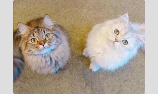 ねこんかつアットホーム猫カフェin表参道 イベント画像1