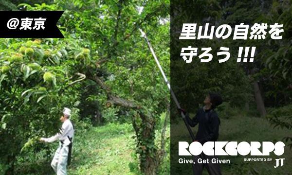 八王子の森を整えよう!里山保全のお手伝い in東京イベント