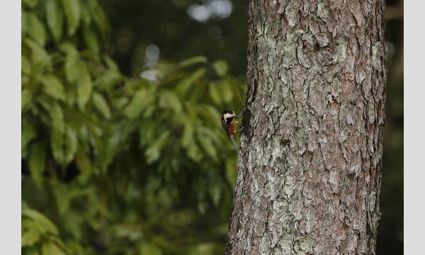真冬の雑木林で小鳥を探そう! in 平和公園 イベント画像2