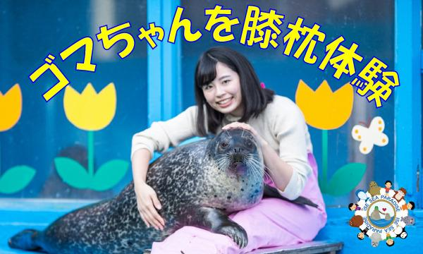 【8/20(金) 12:10スタート】ゴマちゃんを膝枕体験 イベント画像1