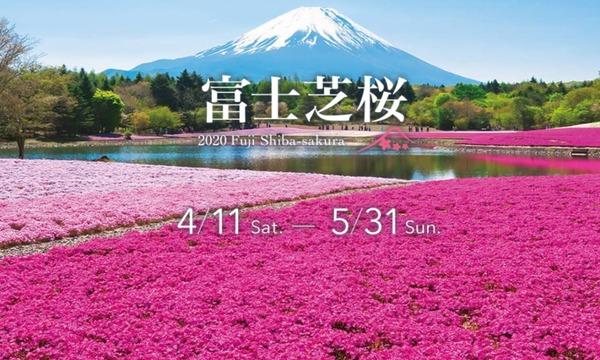 2020富士芝桜まつり入場券イベント