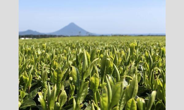 【6/16 & 6/17@清澄白河 】知覧産の新茶葉を使った「国産紅茶の手作り」ワークショップ イベント画像1