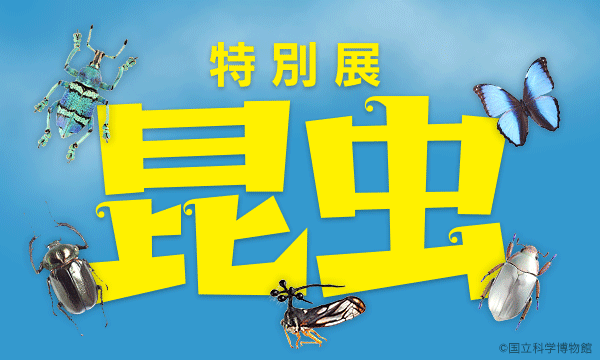 特別展「昆虫」イベント