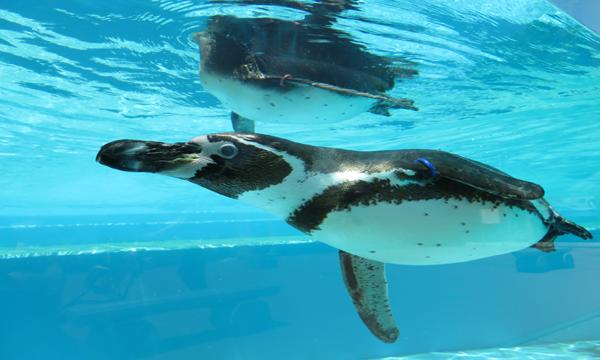 【6/30(水)】【こども動物自然公園】事前情報登録 イベント画像1