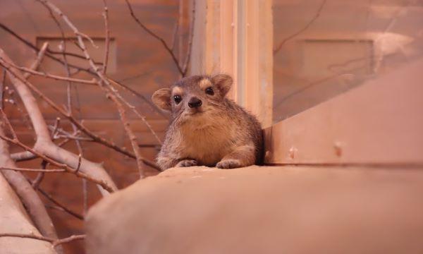 【6/24(木)】【こども動物自然公園】事前情報登録 イベント画像1