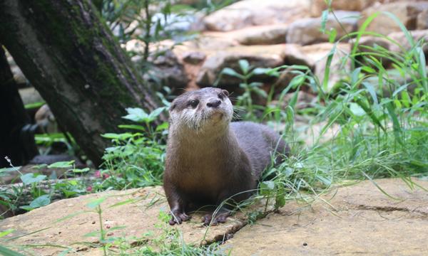 【9/17(金)】【こども動物自然公園】事前情報登録 イベント画像1