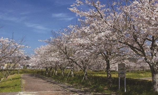 の4/3(土)【第3回】ONSEN・ガストロノミーウォーキングin長崎・波佐見イベント