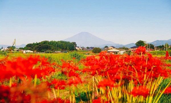 の10/3(日)ONSEN・ガストロノミーウォーキングin藤沢イベント