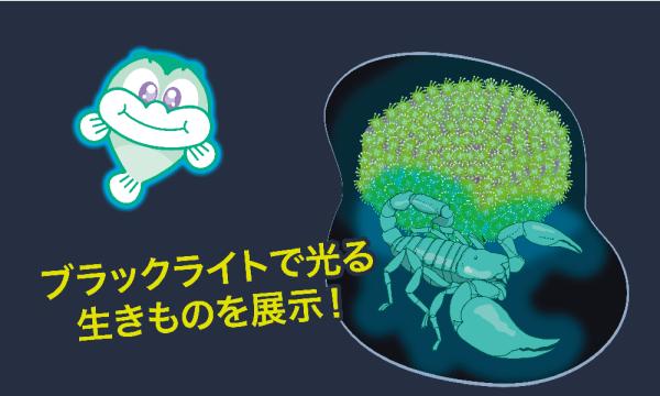 【10/2】ナイト★ゴビウス 2021 イベント画像2