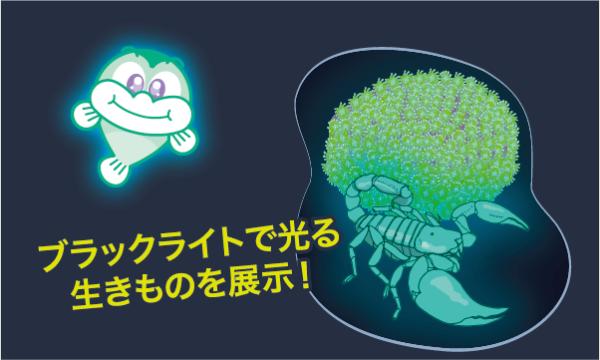 【10/9】ナイト★ゴビウス 2021 イベント画像2