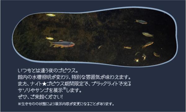 【10/9】ナイト★ゴビウス 2021 イベント画像3