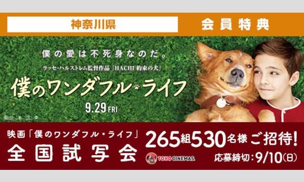 04.【神奈川県】映画「僕のワンダフル・ライフ」試写会にご招待!
