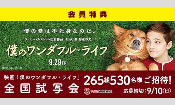 10.【Yahoo!チケットプラス特典】映画「僕のワンダフル・ライフ」試写会にご招待!