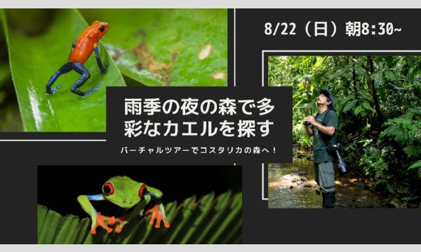 (株)ユーラシア旅行社の現地から生中継!バーチャルツアーでコスタリカの森へ【第3回】雨季の森で多彩なカエルを探すイベント