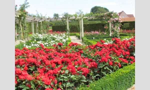 【第5回】『コルマ城のバラ園、バラの種類について』藁谷ちひろさんと旅する 春のベルギー オンラインツアー イベント画像1