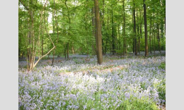 【第2回】『ハレの森のブルーベルとゾニエン・ソワーニュの森』藁谷ちひろさんと旅する 春のベルギー オンラインツアー