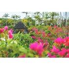 株式会社東南植物楽園のイベント