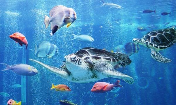 箱根園水族館 割引入場券 最大1,100円割引 イベント画像3