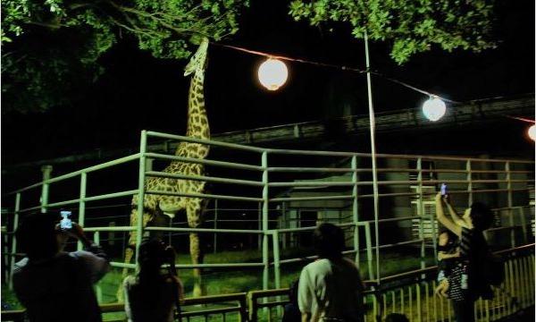 【8/28(土)夜間開園・入園分】熊本市動植物園「夏の夜間開園」 入園予約 イベント画像1