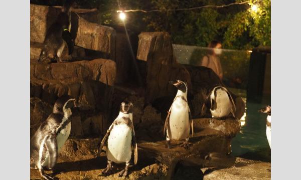 【7/24(土)夜間開園・入園分】熊本市動植物園「夏の夜間開園」 入園予約 イベント画像3