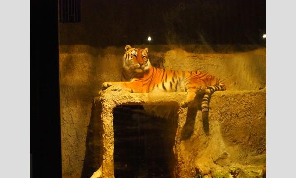 【7/31(土)夜間開園・入園分】熊本市動植物園「夏の夜間開園」 入園予約 イベント画像2