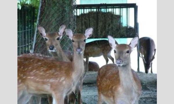 【熊本市動植物園イベント予約】4/18(日 )14:00~15:00 飼育の日イベント【鹿におやつのなる木をプレゼント】 イベント画像1