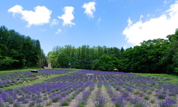 北海道産ラベンダー蒸留実習とアロマクラフト体験(西東京市) イベント画像1