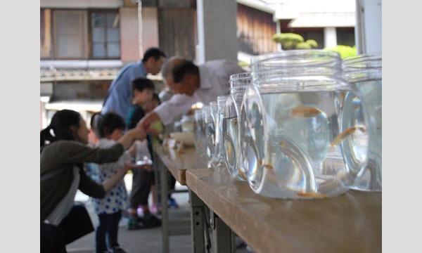 【和歌山県内在住者限定】第5回黒江めった祭り『めだか救い』参加券 イベント画像1
