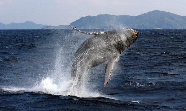 夏休み自由研究オンラインワークショップ「粘土でザトウクジラを作ってくじら博士になろう!」 イベント画像2