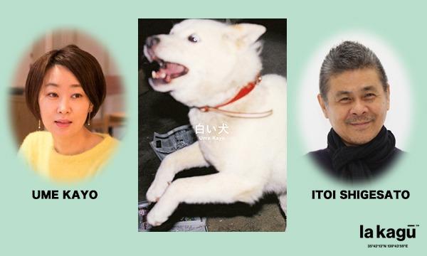 糸井重里×梅佳代 「白い犬とほぼ日のはなし」 イベント画像1