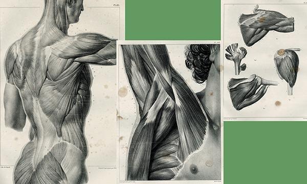 """""""アナトミー""""を知りたい 作りたい 描きたい 人のための《超》講義 ~写真で学ぶ筋学(上肢編)~ イベント画像2"""