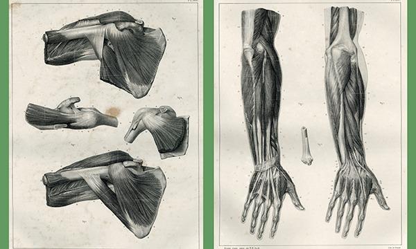 """""""アナトミー""""を知りたい 作りたい 描きたい 人のための《超》講義 ~写真で学ぶ筋学(上肢編)~ イベント画像3"""