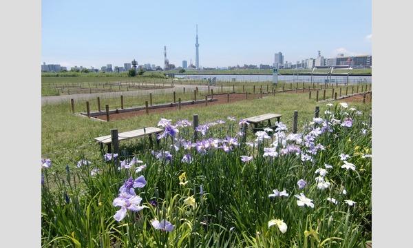 6/3(土)・水上バス特別季節便「堀切菖蒲園」
