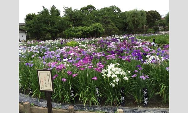 6/4(日)・水上バス特別季節便「堀切菖蒲園」