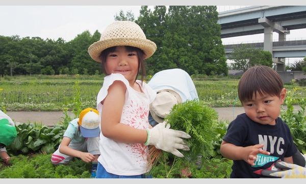 インタープリター(自然解説員)と一緒に自然を楽しもう!学ぼう!  親子でのら体験~有機野菜の畑散策と収穫体験~ イベント画像1