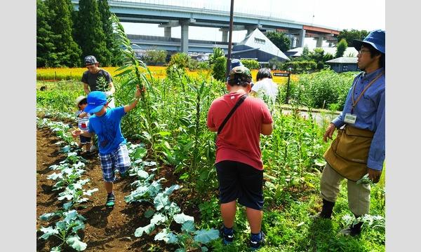 インタープリター(自然解説員)と一緒に自然を楽しもう!学ぼう!  親子でのら体験~有機野菜の畑散策と収穫体験~ イベント画像2