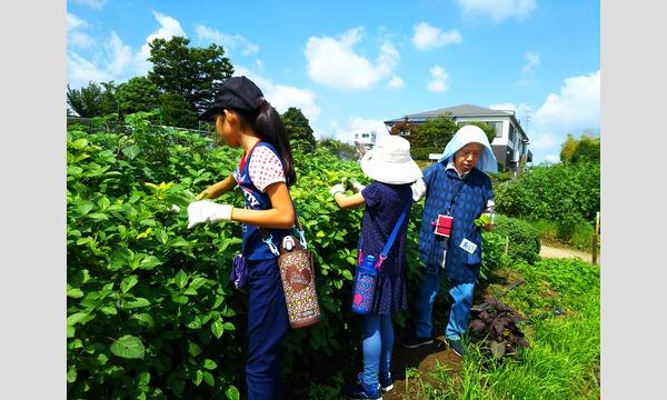 インタープリター(自然解説員)と一緒に自然を楽しもう!学ぼう!  親子でのら体験~有機野菜の畑散策と収穫体験~ イベント画像3