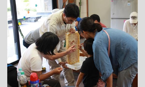 インタープリター(自然解説員)と一緒に自然を楽しもう!学ぼう! 夏休み!親子でミツバチ教室 イベント画像1