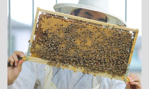 インタープリター(自然解説員)と一緒に自然を楽しもう!学ぼう! 夏休み!親子でミツバチ教室 イベント画像2