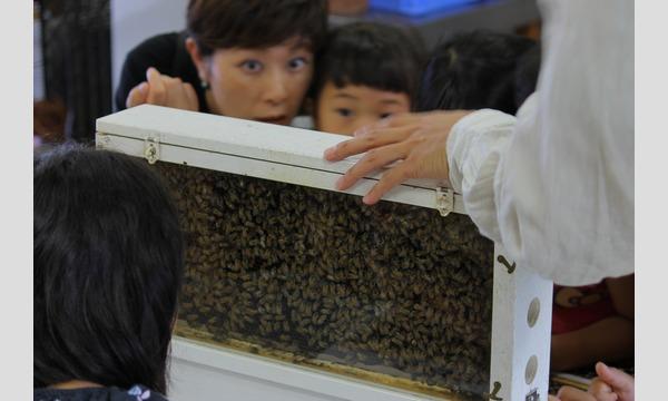 インタープリター(自然解説員)と一緒に自然を楽しもう!学ぼう! 夏休み!親子でミツバチ教室 イベント画像3