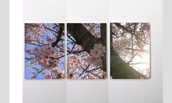 TOHOKU Roots Project「煙が目にしみる」祝い桜パネル【1~10】 イベント画像2