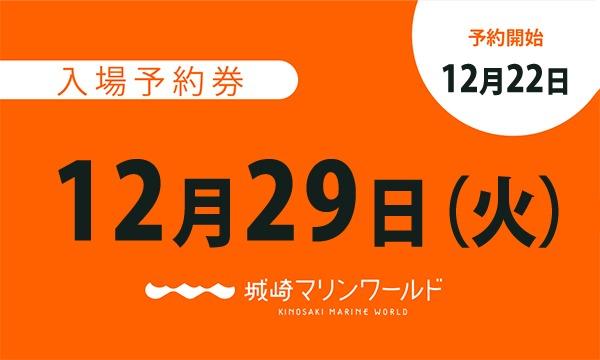 城崎マリンワールドの12月29日(火)入場予約券〈城崎マリンワールド〉イベント
