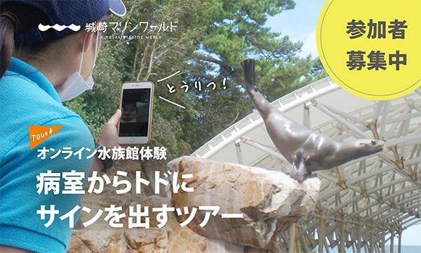 城崎マリンワールドの【水族館オンライン体験】病室からトドにサインを出すツアーイベント