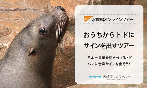 城崎マリンワールドの【オンライン】おうちからトドにサインを出すツアー!イベント