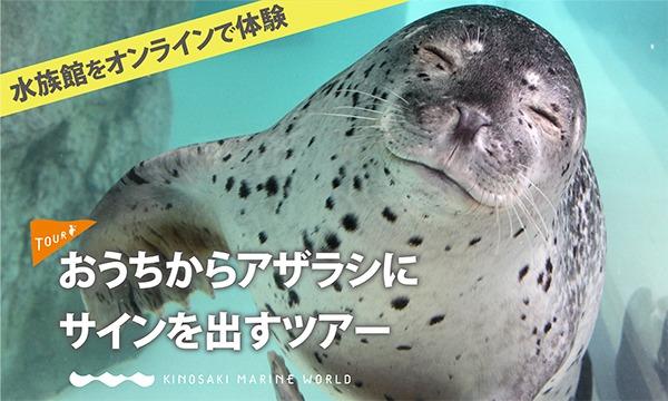 城崎マリンワールドの【オンライン】おうちからアザラシにサインを出すツアーイベント